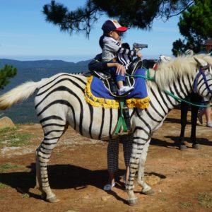 Ehemaliges Ex-Zebra...