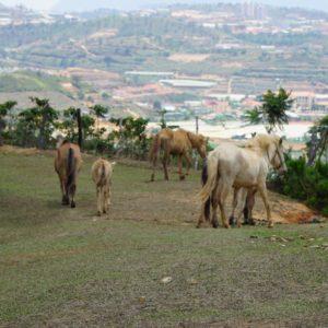 Über die Pferdeweide wieder nach unten