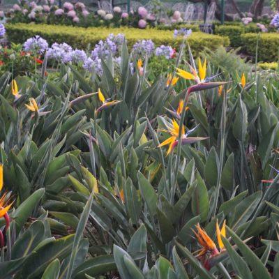 Dalat - Stadt der Blumen