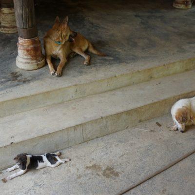 Auch zu heiss für die Hunde