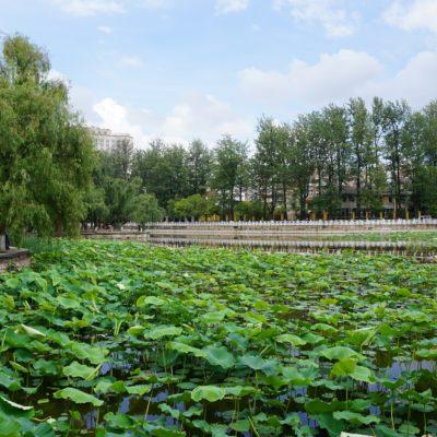 See in Kunming