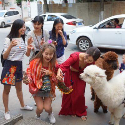 Wer ist hier das Lama ?