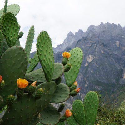 Kaktus mit Kulisse