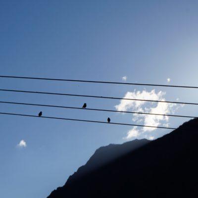 Sonnenaufgang auch für die Vögel