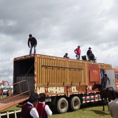 Pferdetransport im Container. Und wieder eine Geschäftsidee...