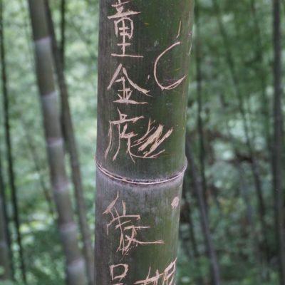 Fette Bambus mit Geschreibsel