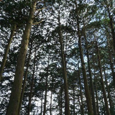 Wald am Sakai Castle