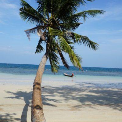 Die böse Palme. Nervige Touristen aus allen Ländern....