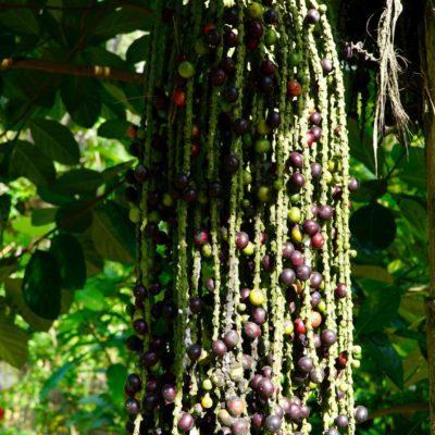 Im Garten - Verbotene Frucht
