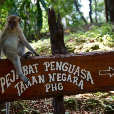 Touri Affen am Resort