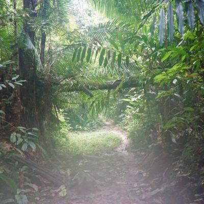 Schöner Wald, tolle Wanderung