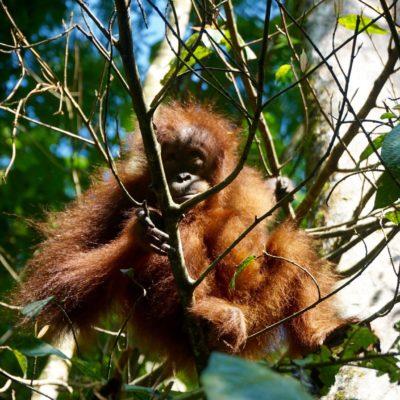 Baby im Baum. Besuch im Camp