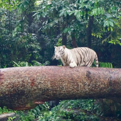 Im Singapore Zoo