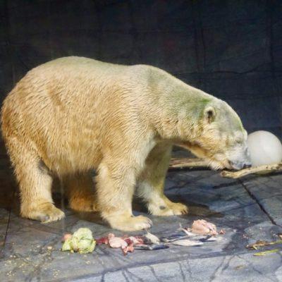 Eisbär, oh Eisbär