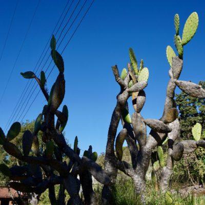 Überall Kaktusse.