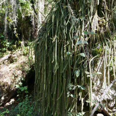 Ein Mega Kaktuss