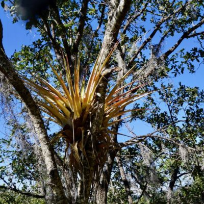 So'n Kaktus im Baum