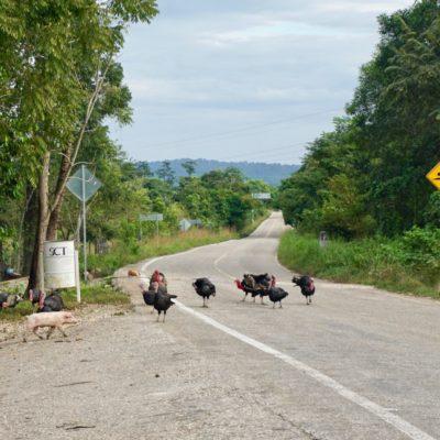 Die Carretera Fronteriza