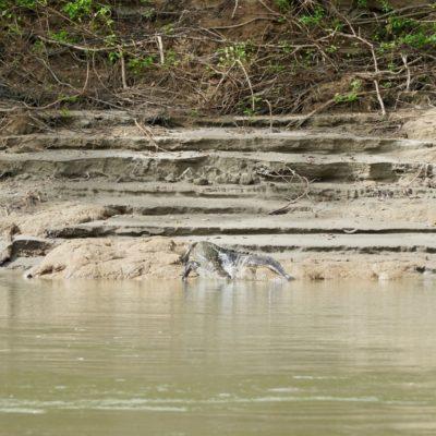 Auf dem Rückweg gab es nochmal zwei Krokodile
