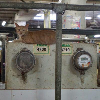 Abends am Fleischmarkt