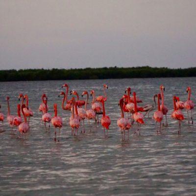 Unsere ersten Flamingos... Yeah !