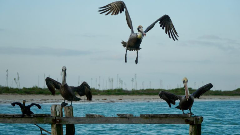 Vogelparadies und der pinke See von Las Coloradas