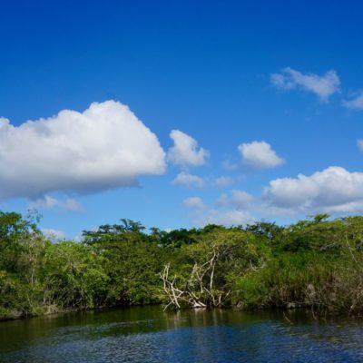 Klasse Landschaft mit tollen Vögeln, Krokodilen und Schildkröten