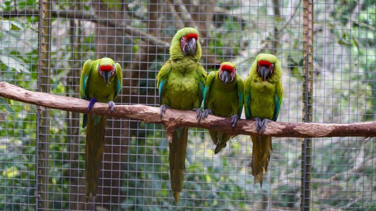 Macaw Mountain Park