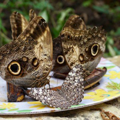 Schicke Augen Schmetterlinge