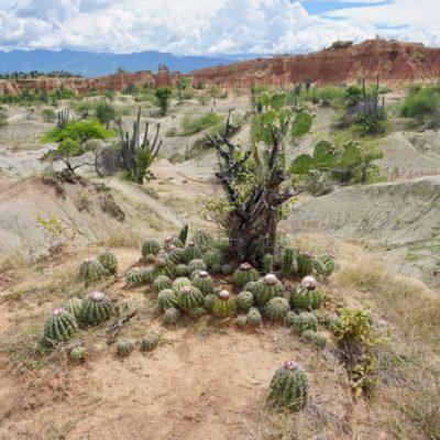 Geile Kakteen mitten in der Wüste