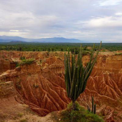 Tolle Landschaft mit Kaktus