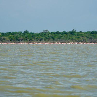 Achtung Flamingos in Sicht