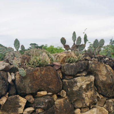 Kaktusmauer
