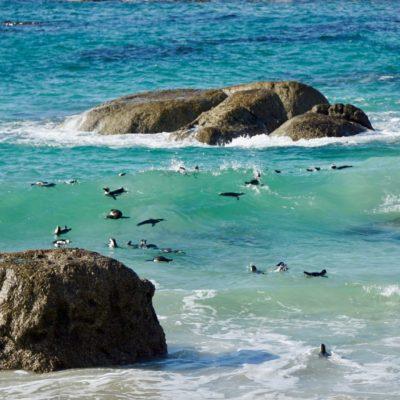 In den Wellen treiben lassen