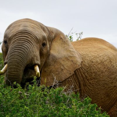 Elefant beim Frühstück