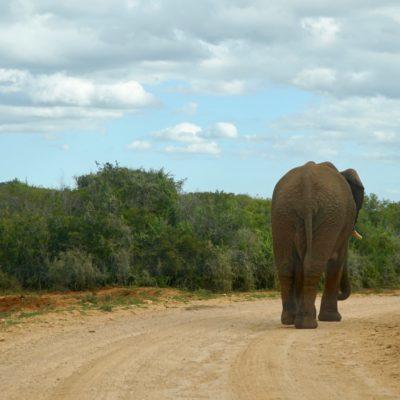 Elefanten-Popo