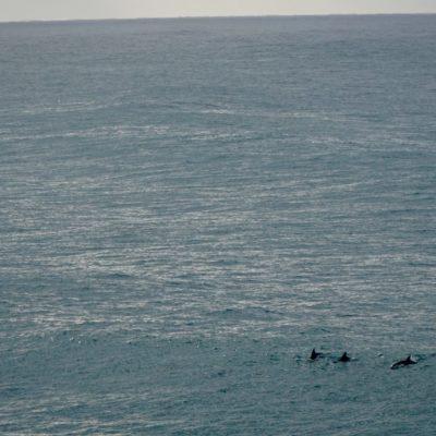 Noch mehr Delfine