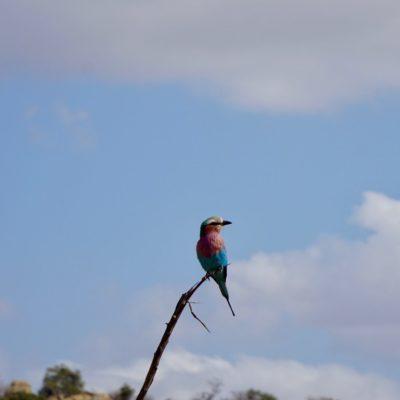 Schöne bunte Vögel gibt es hier auch. Bei dem Kollegen sind wir uns nicht sicher, vielleicht ein Scharlachspint?