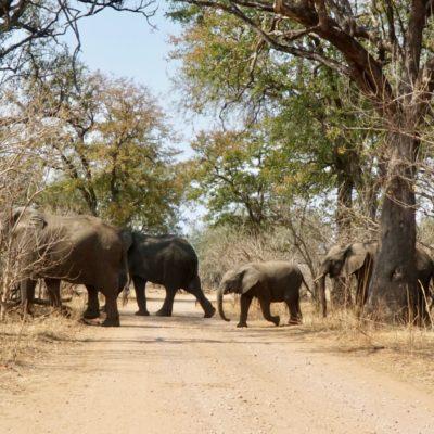Achtung, Elefanten kreuzen! Da entsteht schon mal ein Stau