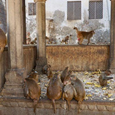 Hier dann auch mal ein paar Affen....