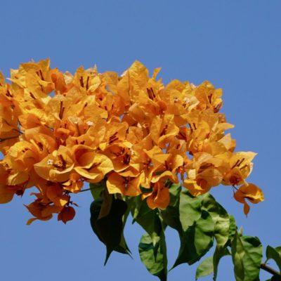 Blumen für Muddi