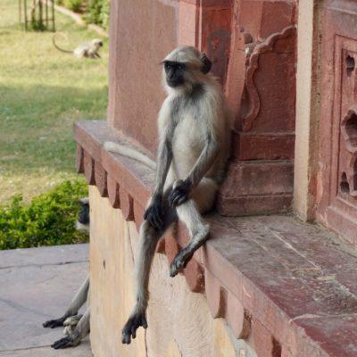 Die totale Affen Entspannung