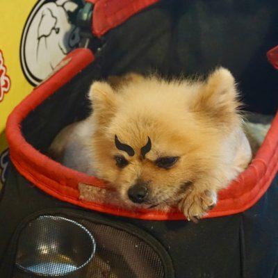 Geschminkter Hund. Auch nicht unser Ding